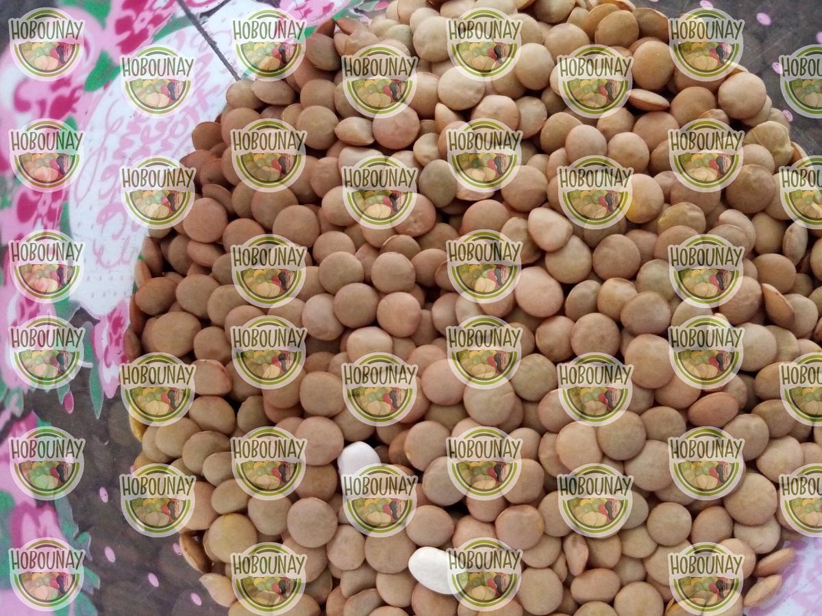 خرید فروش عمده صادرات قیمت عدس فله ای