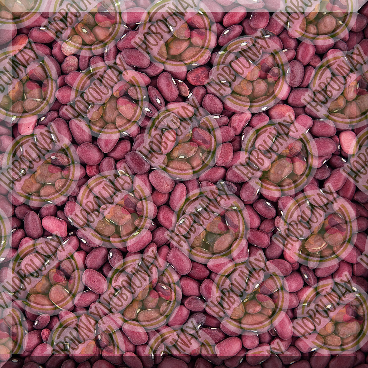 فروش لوبیا قرمز شیراز