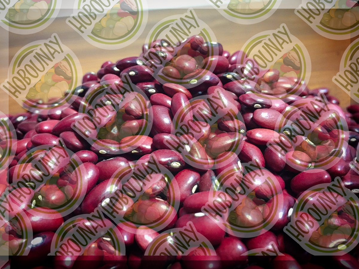 فروش بذر لوبیا قرمز