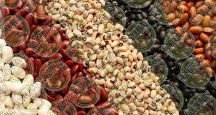 فروش و خرید عمده لوبیا قرمز خمین